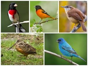 birding in Michigan