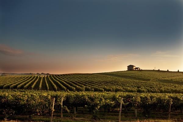 Michigan Winery Tours