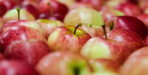 Michigan Apple Orchards