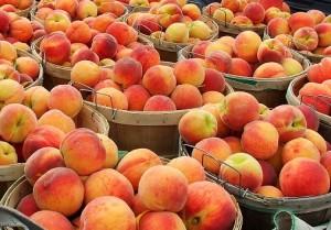 peach farms in Michigan