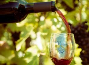 Fenn Valley Wine Tours