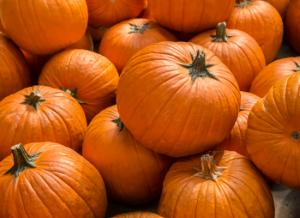 Pumpkin Picking in MI