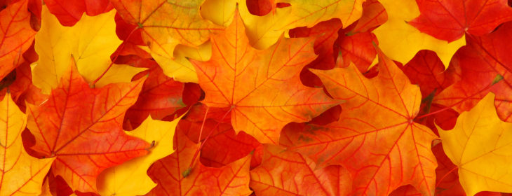Fall leaves in bright oranges and yellows