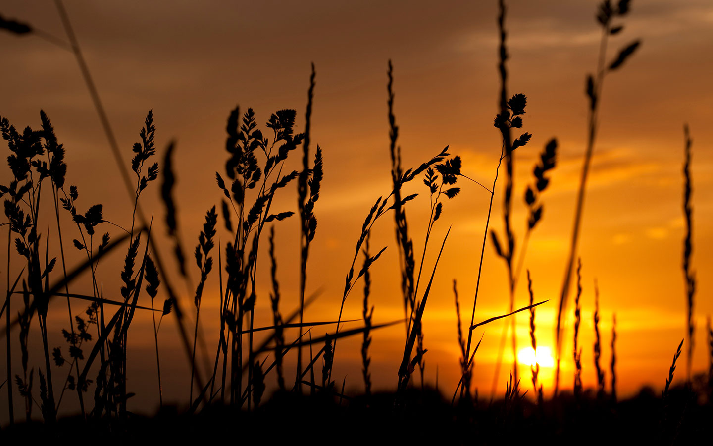Sunset and grasses in Michigan and the way to our bed and breakfast