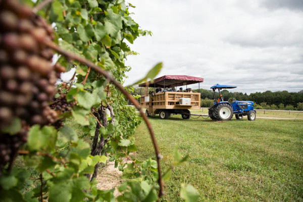 Tractor pulling a trailer full of tourists at Fenn Valley Vineyards