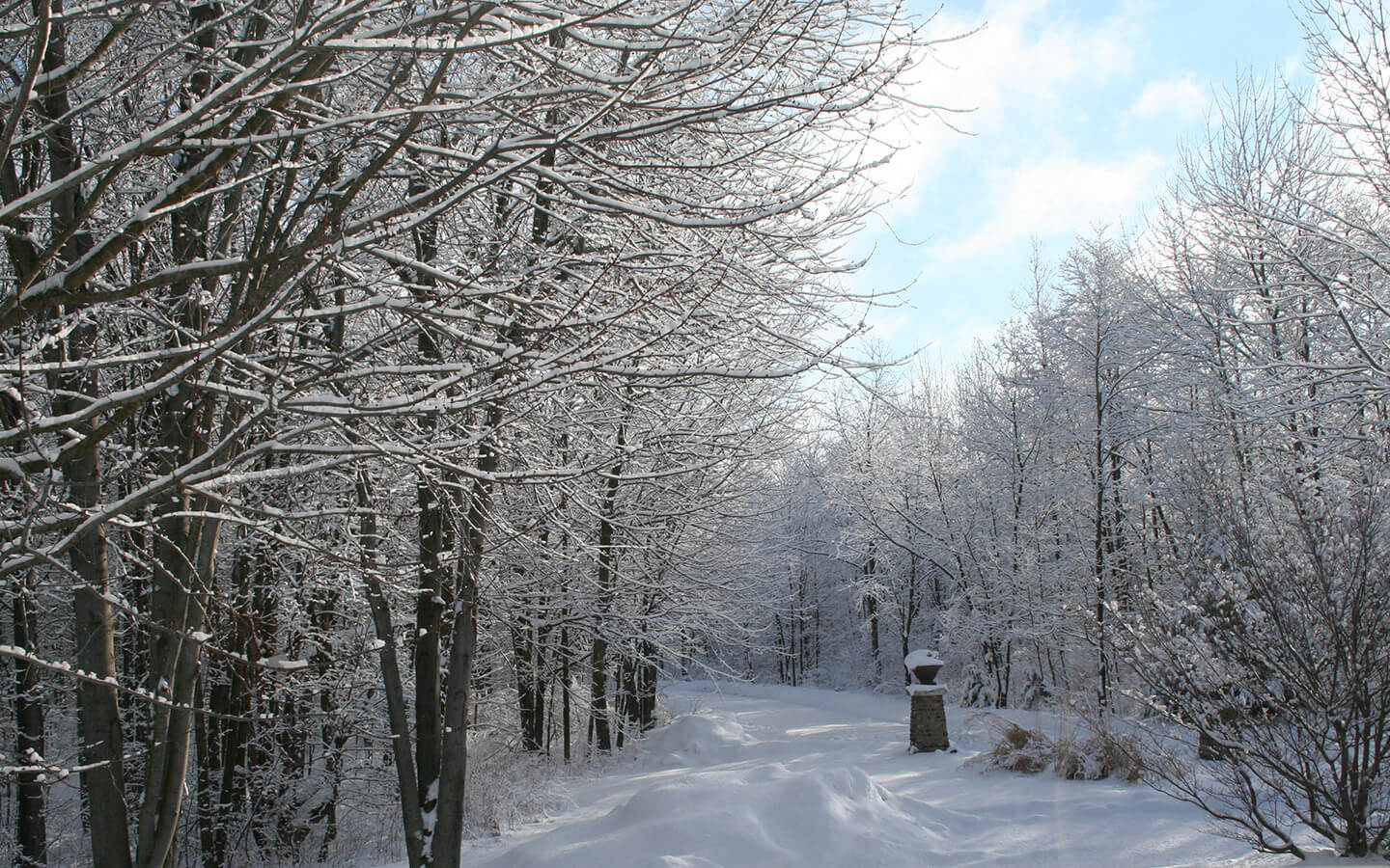 Snowshoe trails and hiking during a winter getaway in Michigan