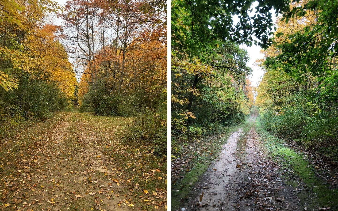 Two views of The Castle's hiking trails in the woods with trees in shades of green, yellow and orange
